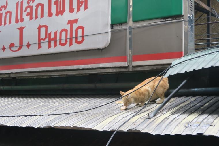 トンロー駅にいた猫