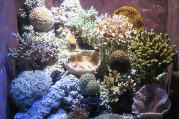 美ら海水族館内部3