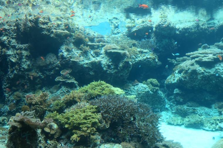 美ら海水族館内部