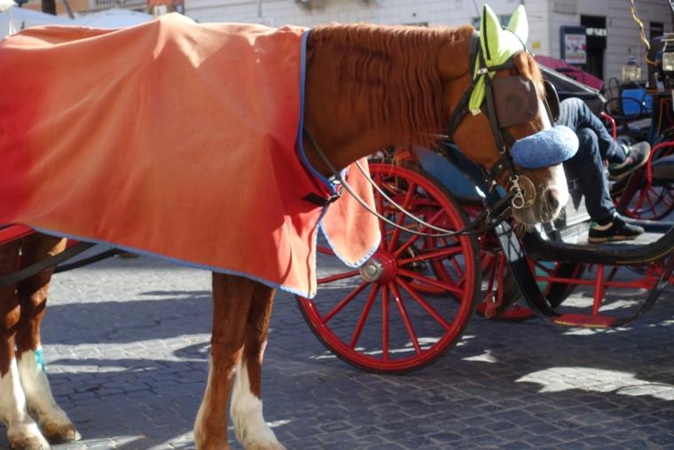 Piazza-di-Spagna-horse-2